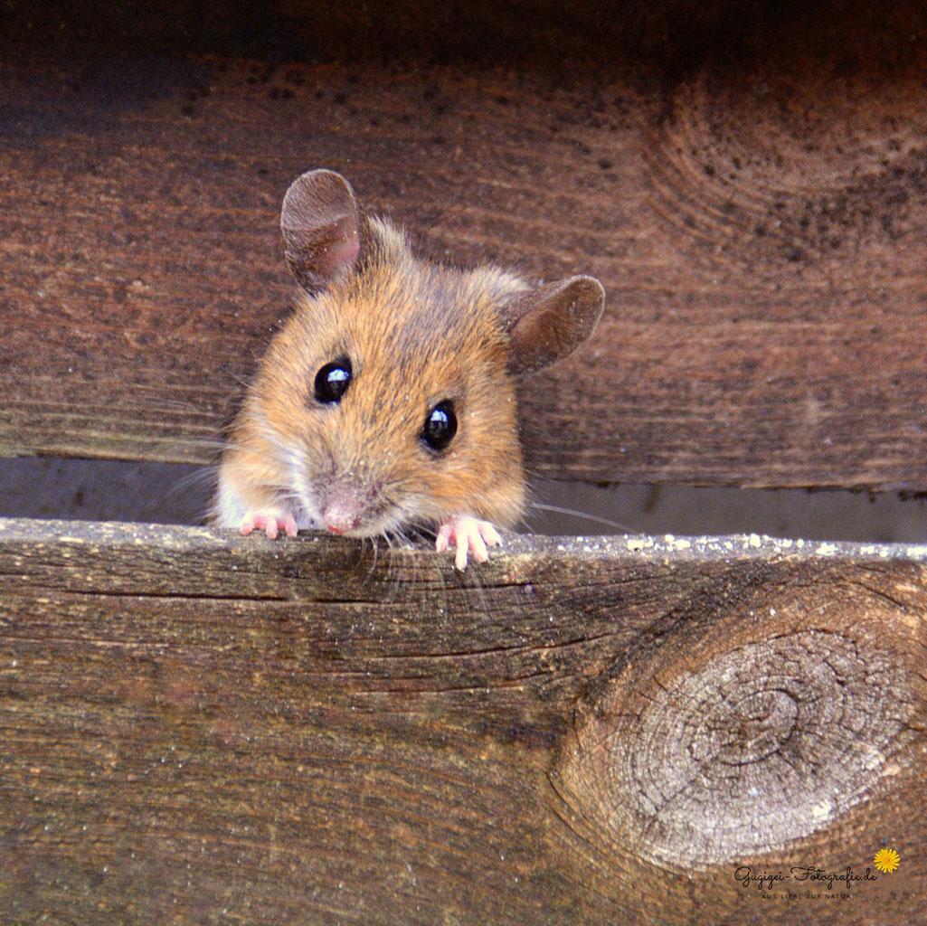 """""""Meine Maus"""""""