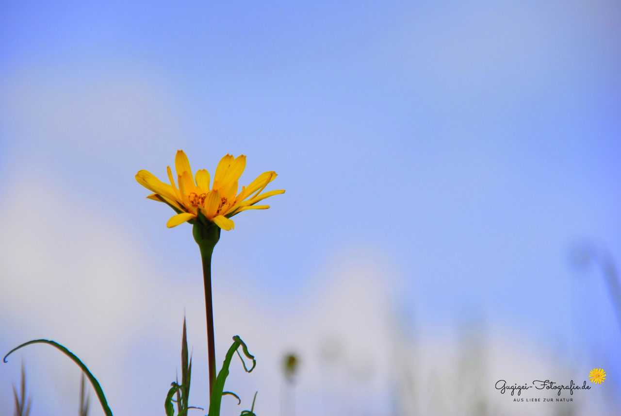 Gugigei-Fotografie Lieblingsfotos Planzen3