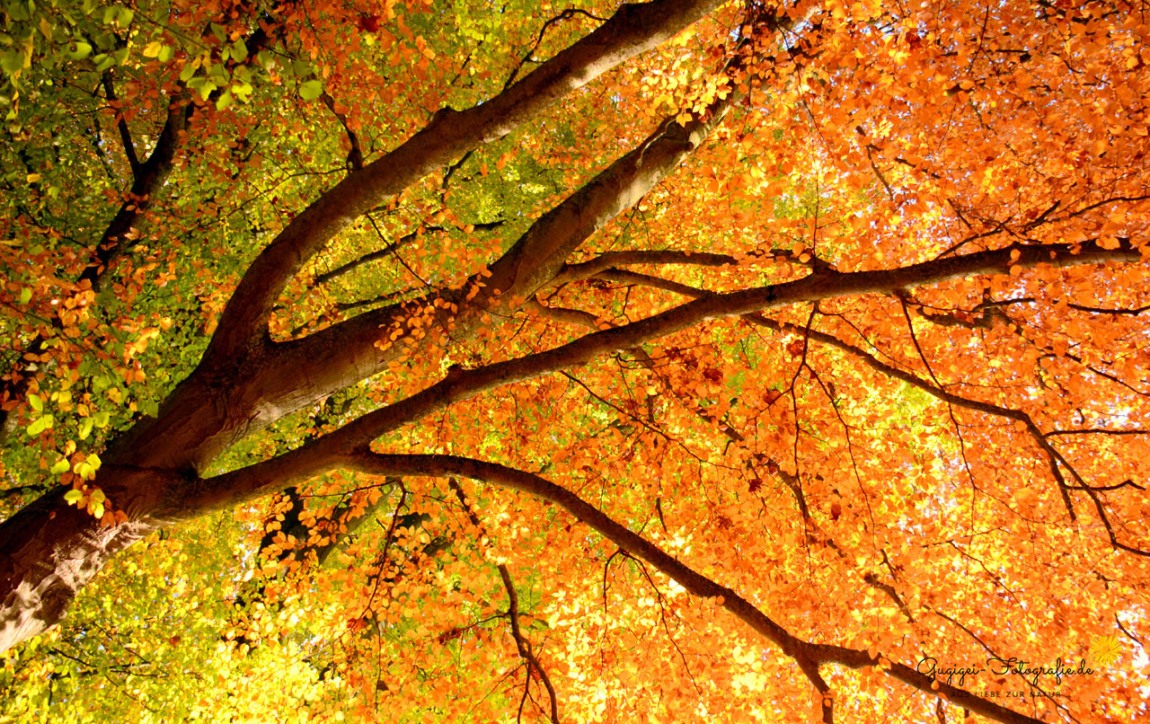 Blätterwald – Herbst