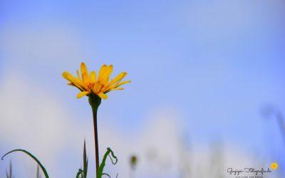 Gugigei-Fotografie Lieblingsfotos Planzen2
